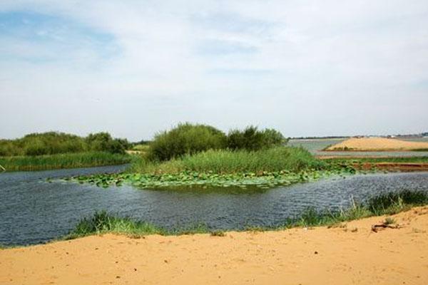 特色之二是沙山北面是浩瀚无垠的腾格里沙漠。而沙山南面则是一片郁郁葱葱的沙漠绿洲。游人既可以在这里观赏大沙漠的景色,眺望包兰铁路如一条绿龙伸向远方;又可以骑骆驼在沙漠上走走,照张相片,领略一下沙漠行旅的味道。 特色之三是乘古老的渡河工具羊皮筏,在滔滔黄河之中,渡向彼岸。 这种羊皮筏俗称排子,是将山羊割去头蹄,然后将囫囵脱下的羊皮, 扎口,用时以嘴吹气,使之鼓起,十几个浑脱制成的排子,一 个人就能扛起,非常轻便。游人坐在排子上,筏工用桨划筏前进, 非常有趣。