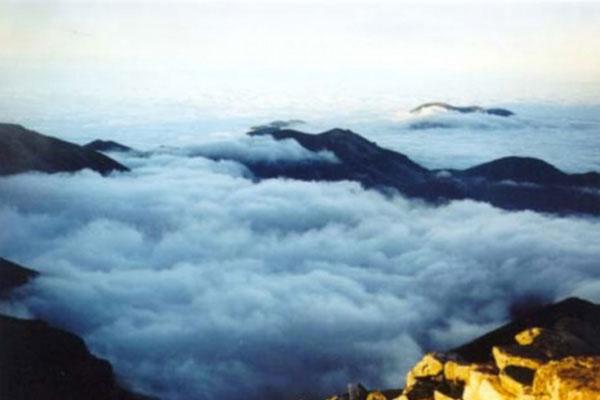 太白红杉景观林带(海拔3000--3500米),高山灌丛草甸景观带(海拔3400米图片