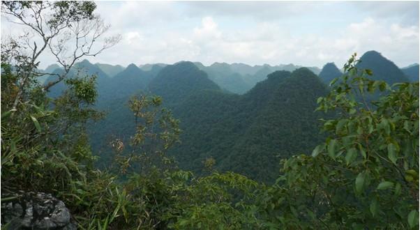 茂兰这一罕见的喀斯特森林生态系统在全世界的同图片
